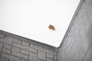 アシナガバチと巣