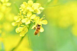 花の上にいる蜂