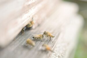 複数のミツバチ