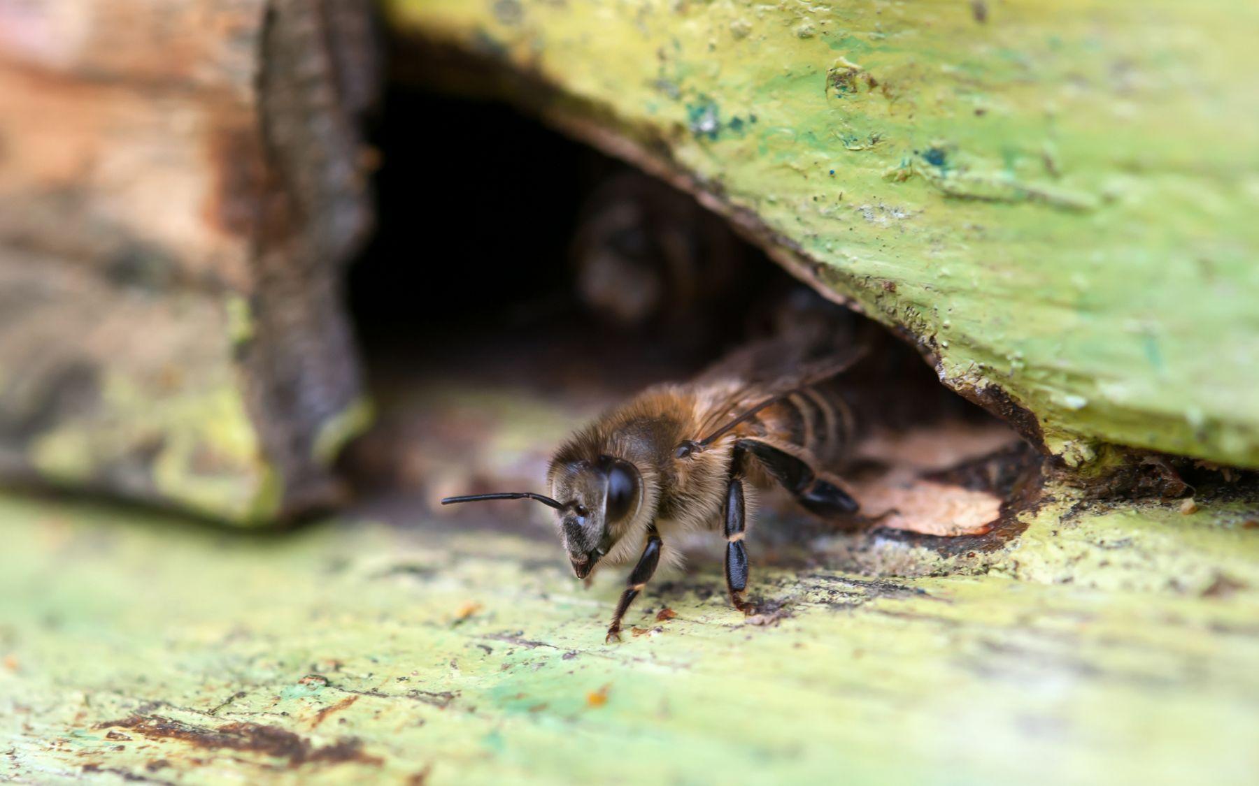 木に潜む蜂